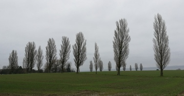 Standing Trees